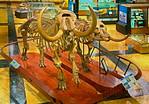 Prehistoric animal fossil skeletons: American mastodon, mammut americanum, couple, the only mastodon couple on display anywhere. The Male (on left) mastodon, named the Buesching mastodon, wa ...